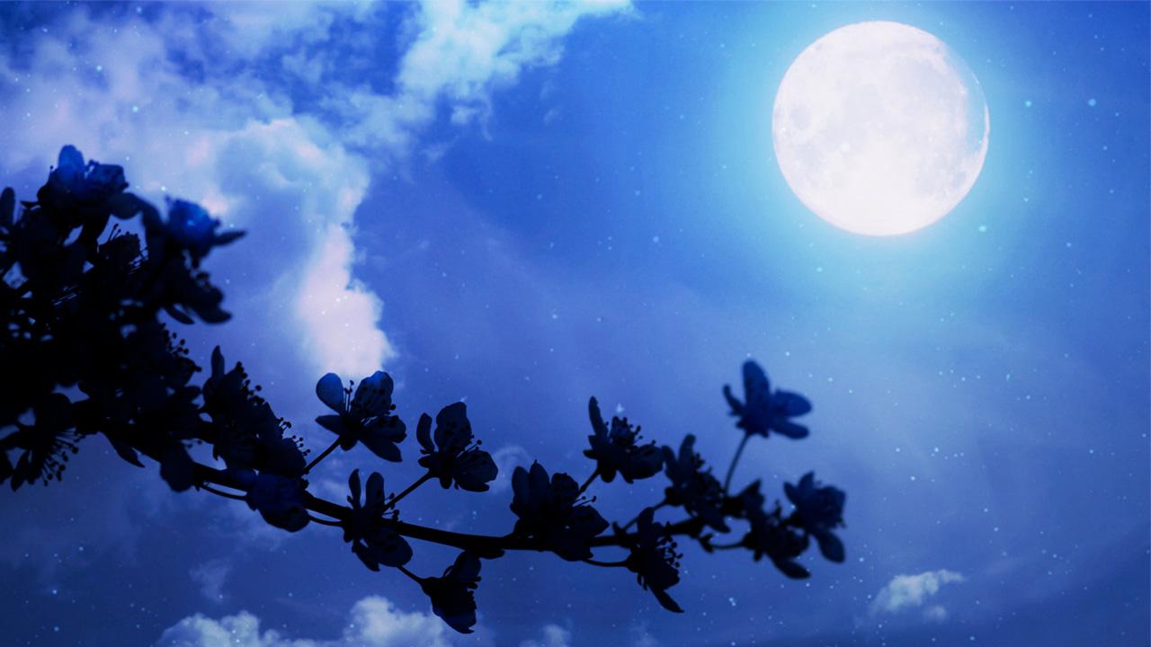 月と雲と花