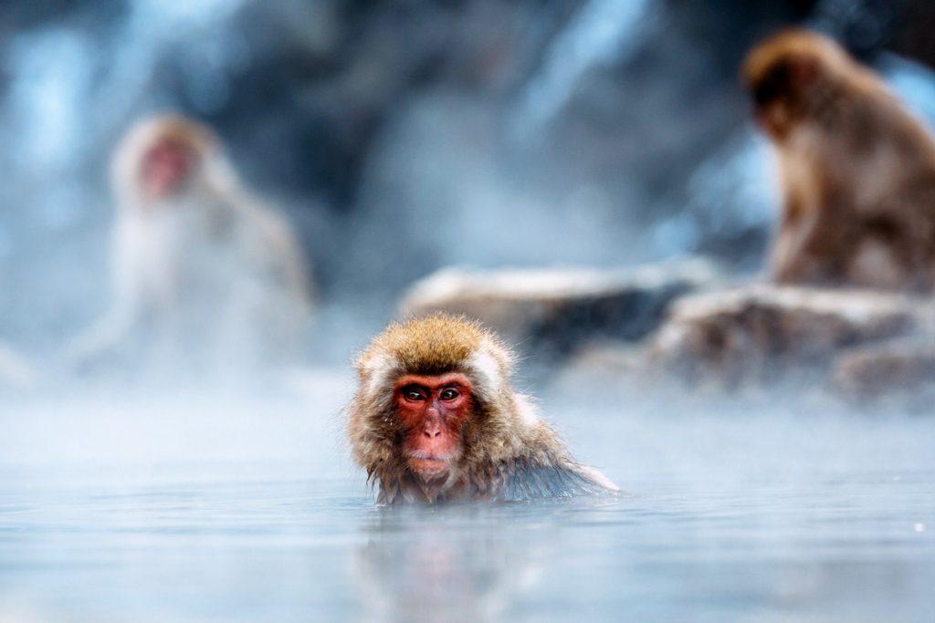 温泉に浸かるお猿さん