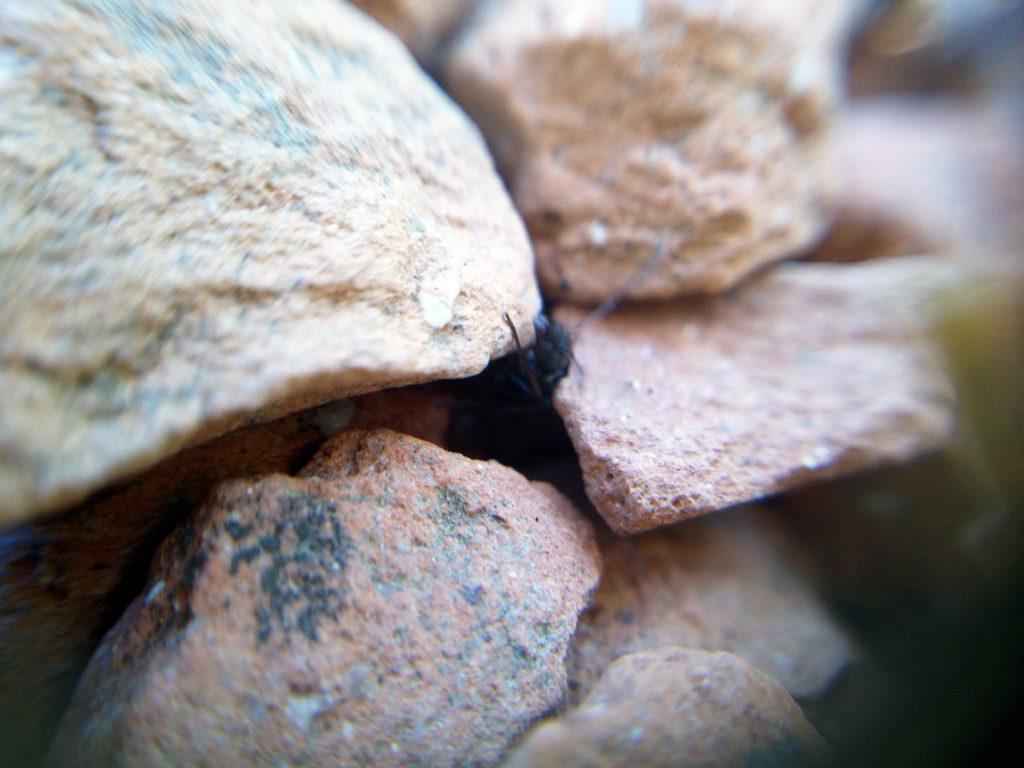 小石の隙間から這い出る蟻