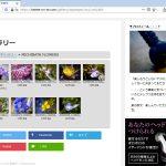 フォトアルバム:MICHIBATA FLOWERS