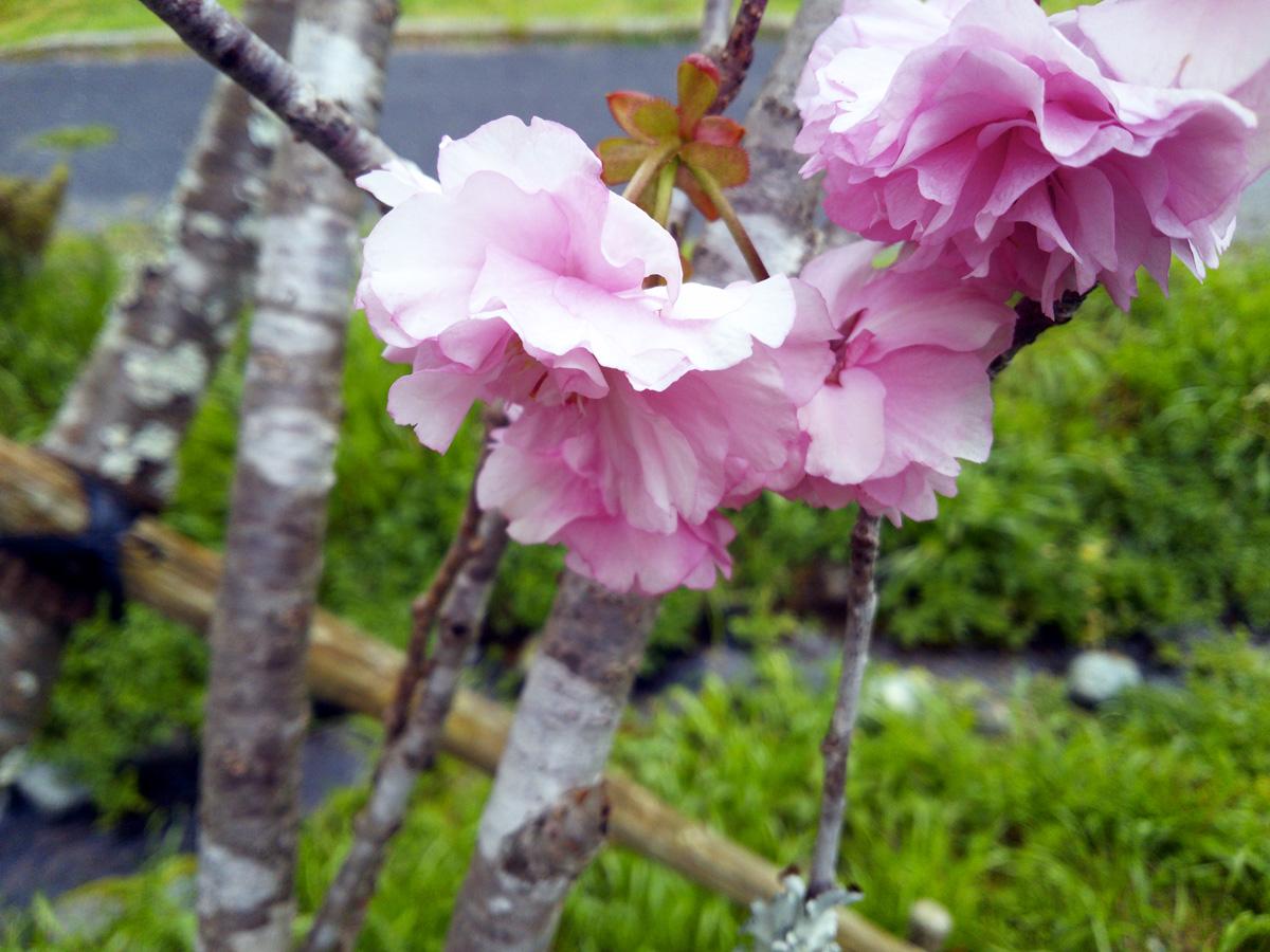 雨の日の春