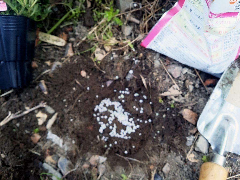 タピアンの植え込み(4):再度、肥料を撒く